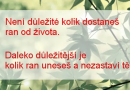 [citát] Není důležité, kolik dostaneš ran od života …